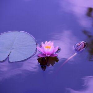 Siddende Bevidst Nærværs Meditation