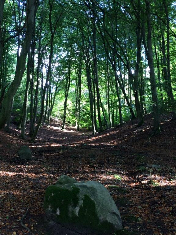 På mit online-kursus i mindfulness lærer du at finde ro, f.eks. i skoven.